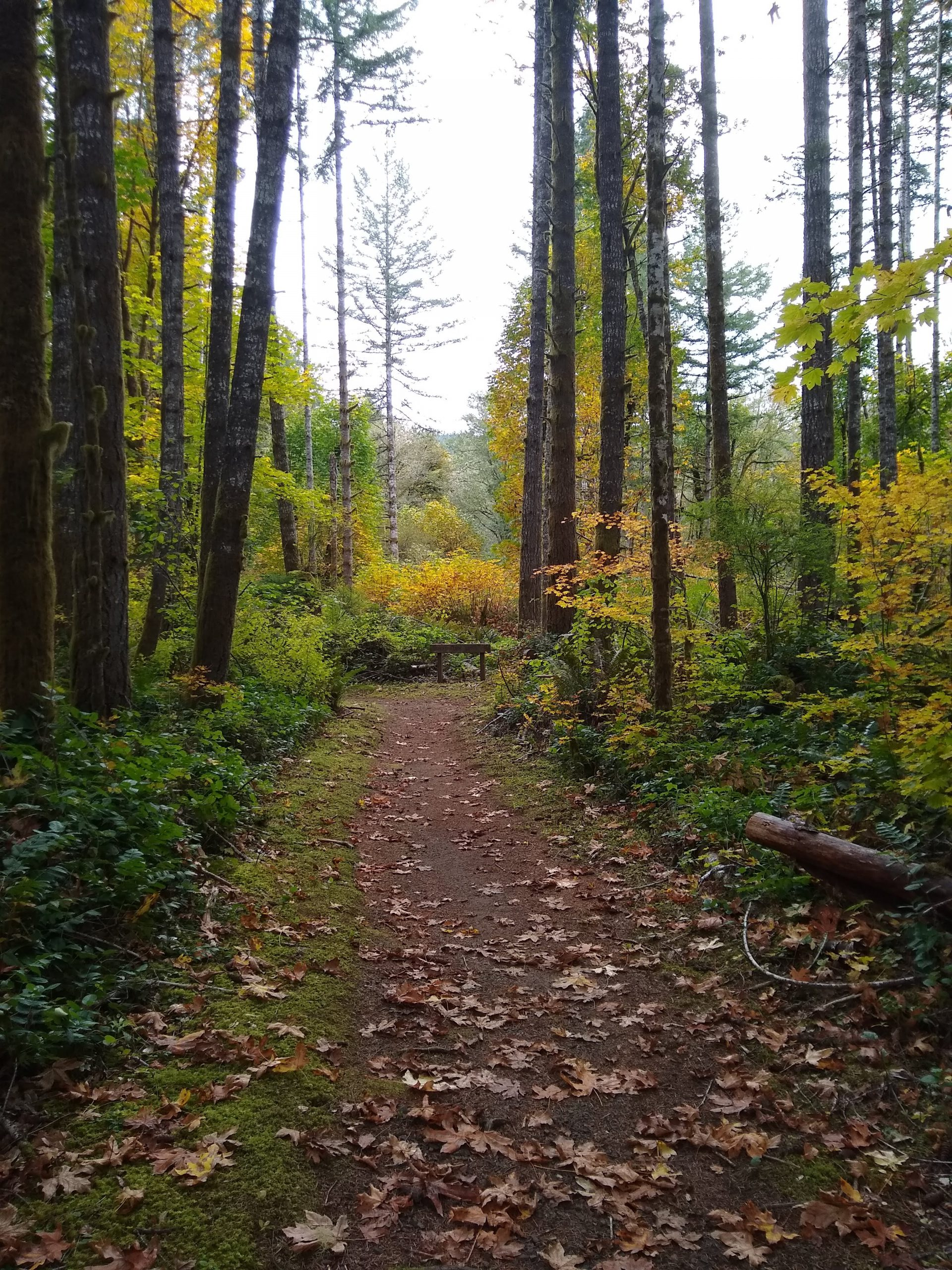 The trail at Clemens Park, where we hold Salmon Watch field trips each fall.