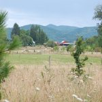 View from Luckiamute Meadows Farm