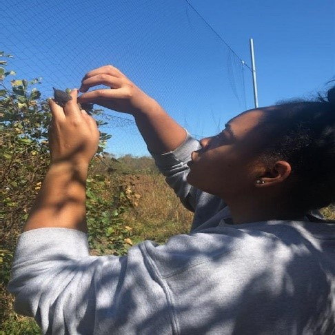 Young woman getting a bird out of a mist net for scientific studies