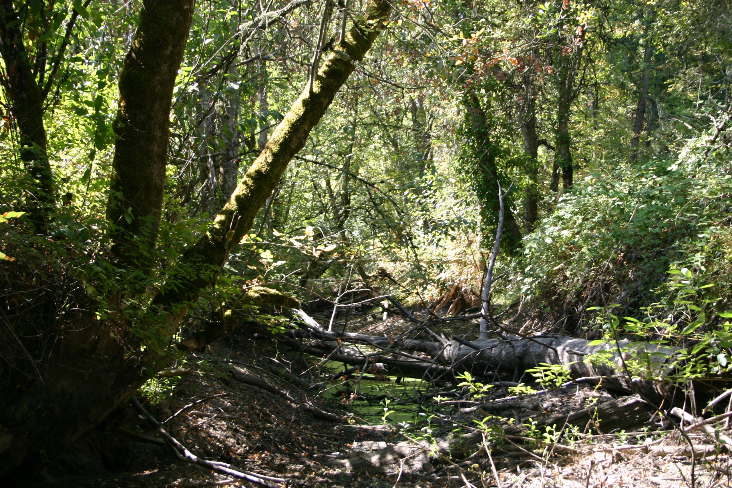 Upstream from Hwy 99 by jeremy Colson after clean up