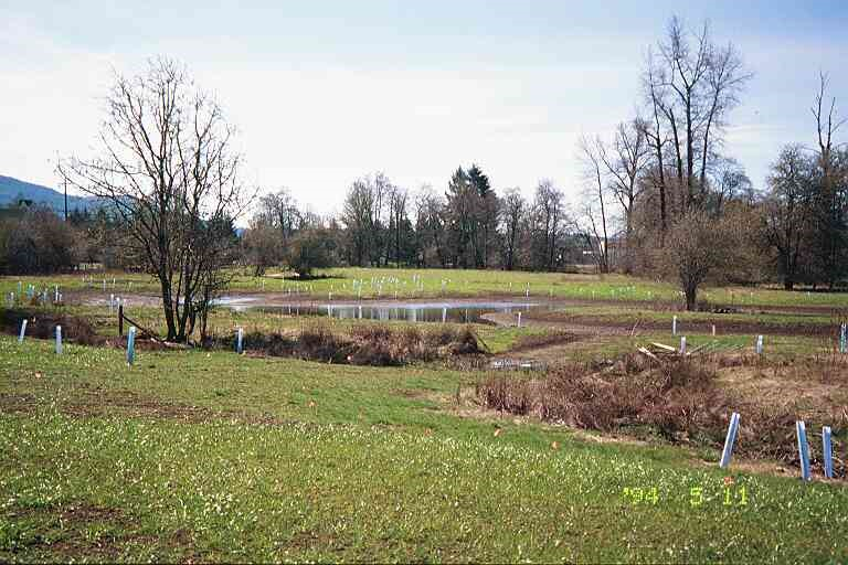 A southern pond was excavated and trees and shrubs were planted around the perimeter and protected by tree tubes.