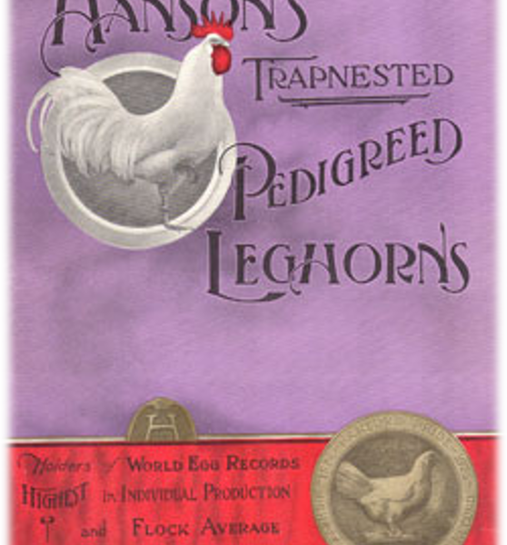 A purple and red advertisement for Hanson's pedigreed leghorns