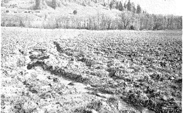 A field showing evidence of deep erosion gullies.