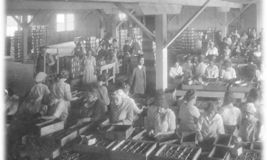 Mostly female workers inside a canning plant with boxes of cans circa 1925.