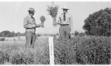 Two men standing side by side in two fields. The one on the left holds a much smaller bunch of alfalfa, the one on the right hold larger alfalfa grown in soil treated with Borax.