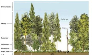 a forest with trees of varying heights to demonstrateall the canopy layers that birds use