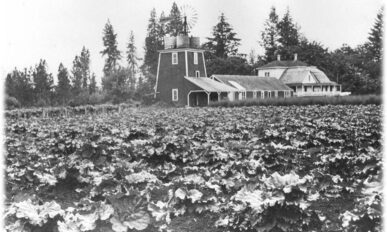 house and farm with two-story water tower and windmill, rhubarb field in foreground.