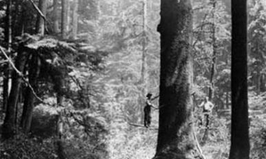 Two men pose for a black and white photo while preparing to harvest a large tree.